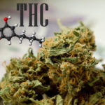 The Cannabis Aperitif With THC? That's Artet