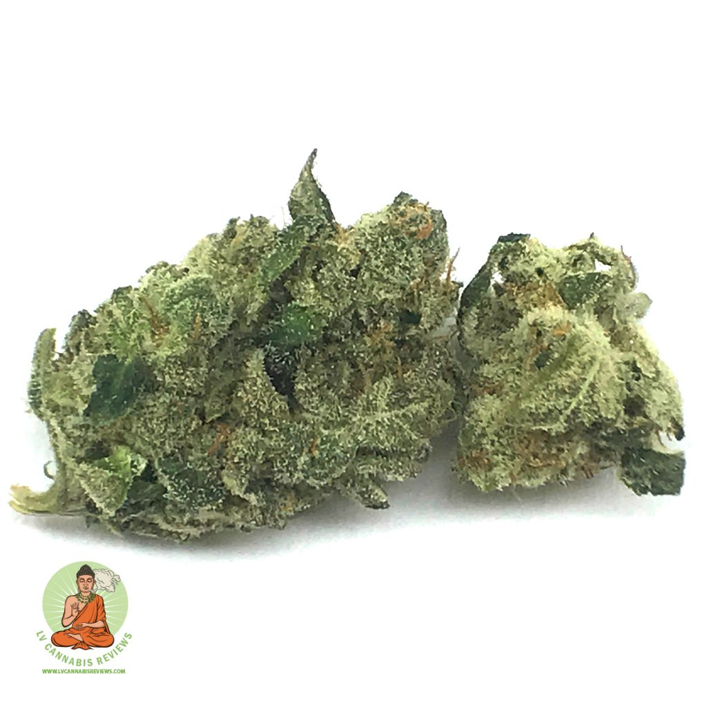 hollywood-holistic:-urkle-berry-(hybrid)