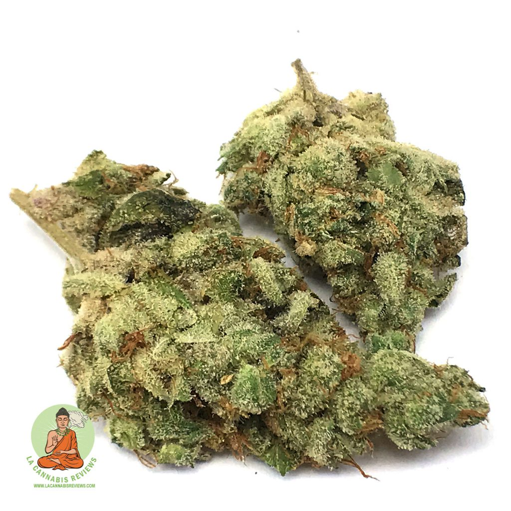 Herbarium Garlic Cookies Review November 2019 Herbarium Recreational Dispensary