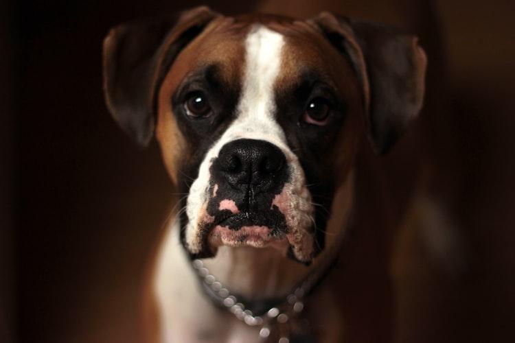 Creso-Pharma-Pursuing-Animal-Health