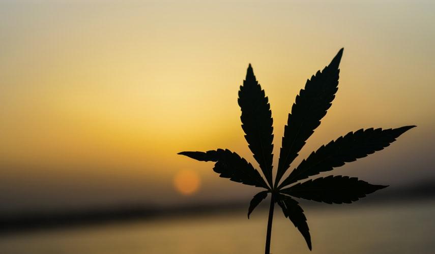 Hemp-Marijuana-or-not-marijuana
