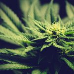 Los Angeles to dismiss 66,000 marijuana convictions
