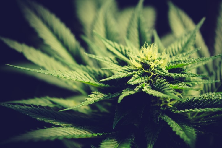 Los-Angeles-to-dismiss-66000-marijuana-convictions
