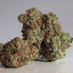 Study: Medical Cannabis Access Associated with Fewer Workers' Comp Claims