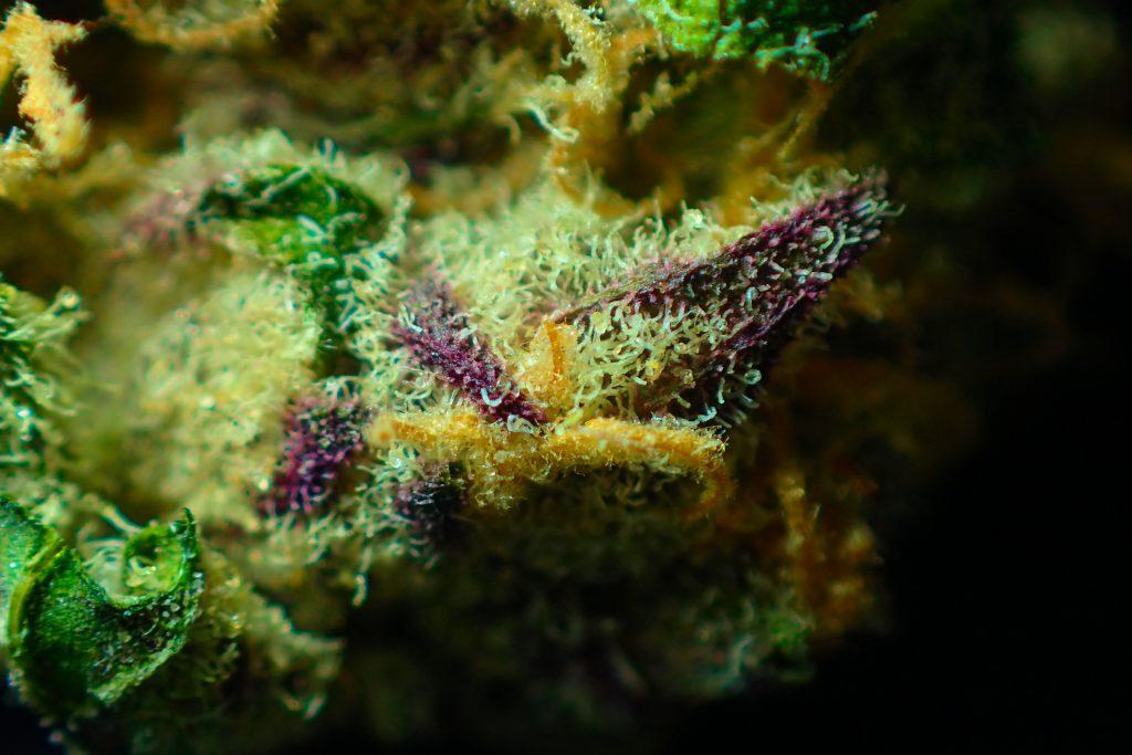 Santa Ana Criminal Steals $145,000 Of Marijuana Revenue _cannabis Review
