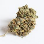 Some Of The Most Crowd-Pleasing CBD Strains On The Market